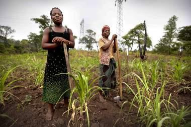 african farmers landmine rats