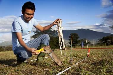 giant rat detect landmine