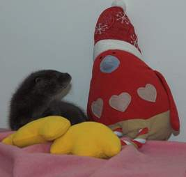 baby otter gets a stuffed robin