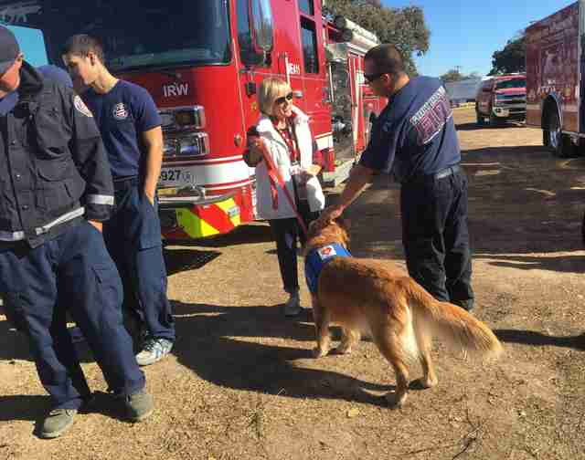 california fires therapy dogs