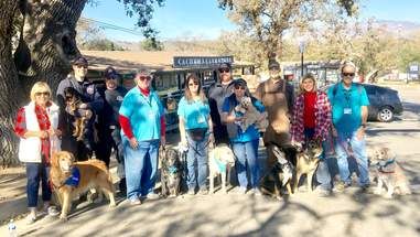 therapy dogs california fires