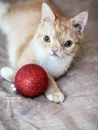 smush cat rescue kitten
