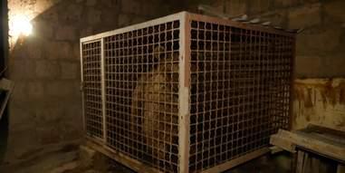 Bear kept inside small cage