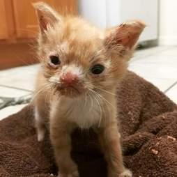 smush rescue cat kitten