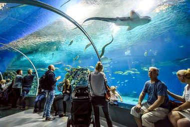 Blue Planet National Aquarium Denmark