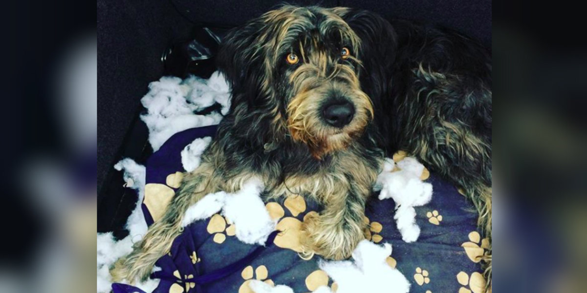 Why Do Dogs Scratch Their Beds? - The Dodo