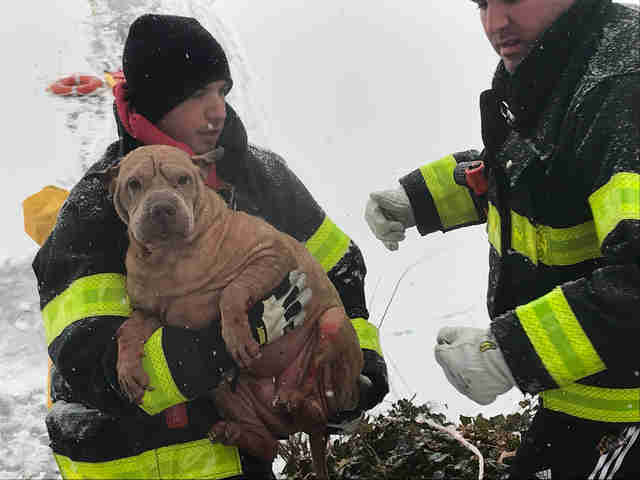 firefighters warm Shar Pei Lilly after she was pulled from water