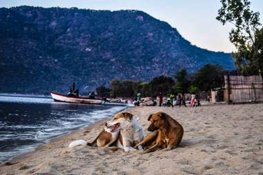 Two dogs lying on beach together