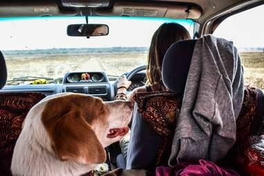 Dog inside car traveling Africa