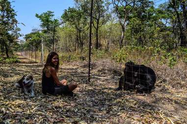 Dog lying behind woman at chimpanzee sanctuary