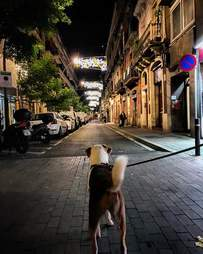 Dog looking down street in Europe