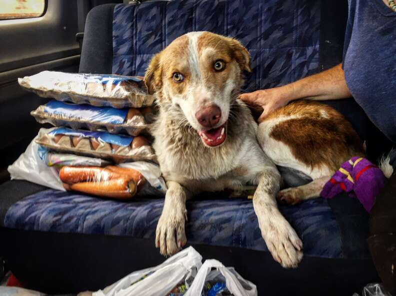 Dog lying on car seat