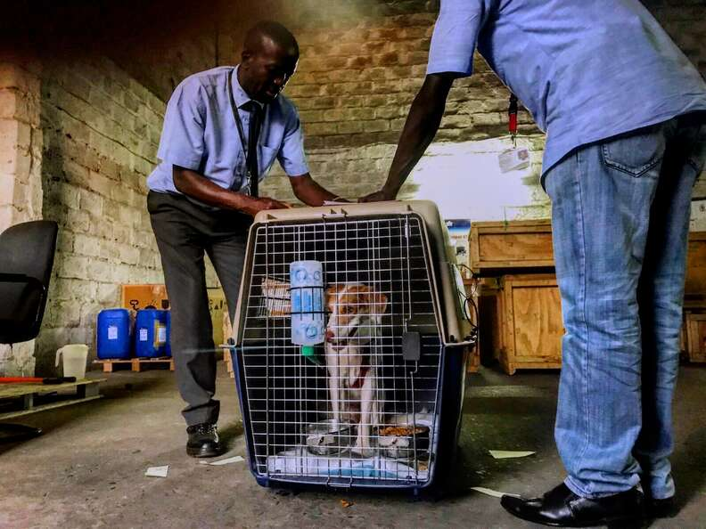 Dog in travel crate at African airport