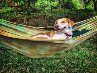 Dog lying in hammock