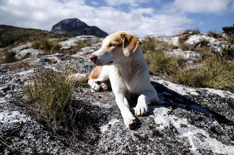 Dog lying on top of mountain
