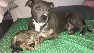 dog cats and rats