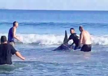 Men pushing wild orca into the ocean