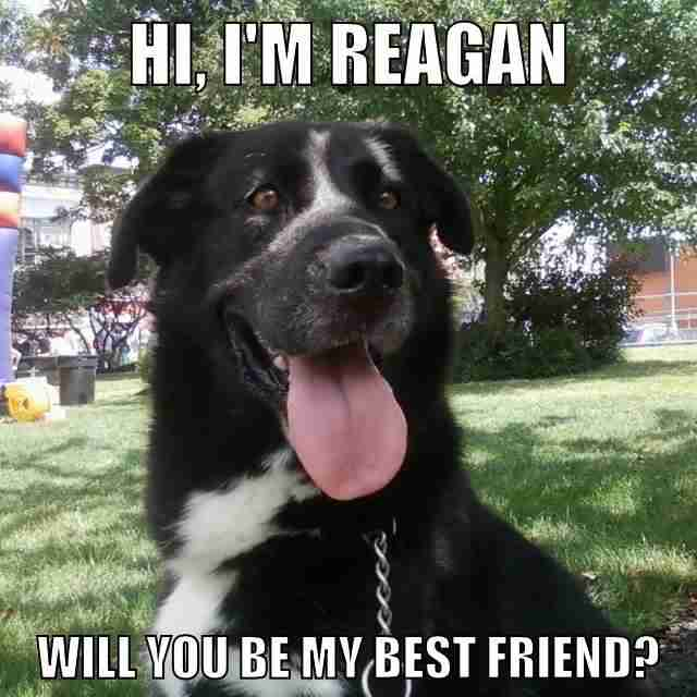 Reagan meme on Facebook