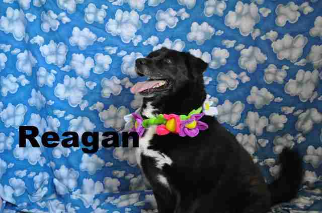 Reagan the dog dressing up