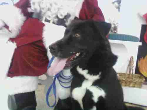 Reagan the shelter dog meets Santa