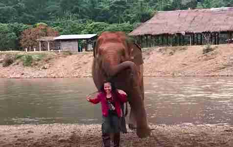 Woman laughing with elephant following her