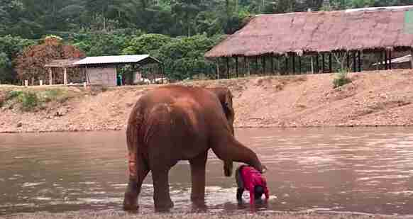 Elephant holds her foot over woman