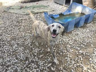 dog addicted heroin afghanistan