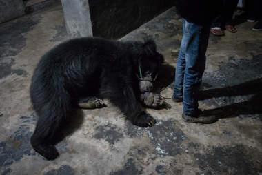 Bear lying on dark, dirty floor
