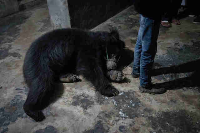 Bear lying on dark, dirty floor