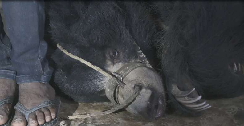 Bear lying on dark floor