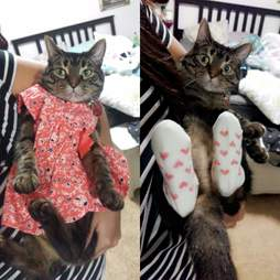 Sophie the cat wears baby clothes