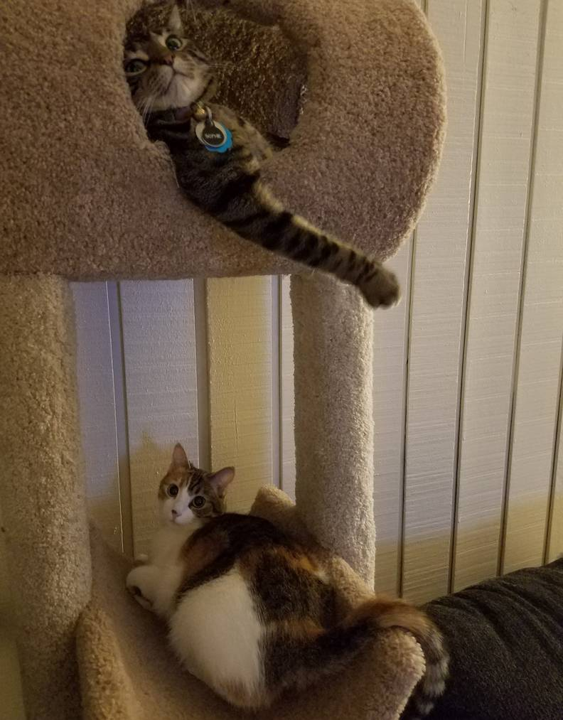 Cat Helps Her Parents Prepare For New Baby Sibling The Dodo