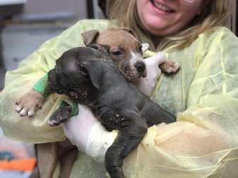 frozen puppies found in box