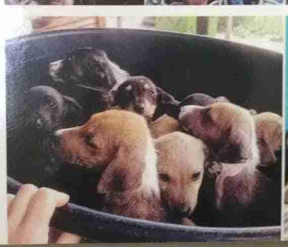 Photograph of puppies inside of a bucket