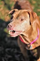 dog with unique smile
