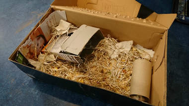abandoned hamsters
