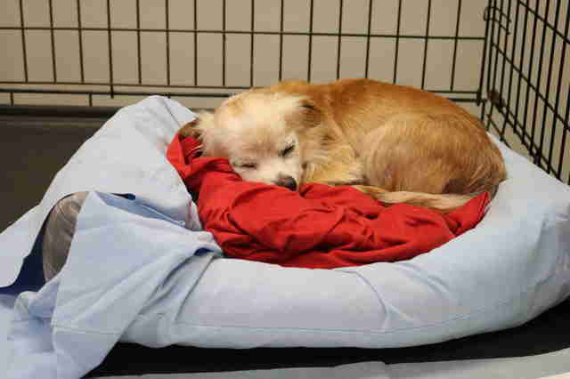 Rescued puppy sleeps at rescue center after being saved from neglect