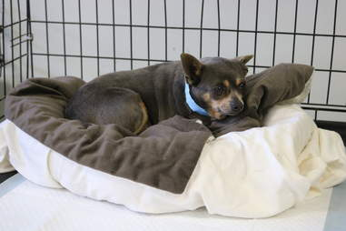Dog saved from neglect gets bed at rescue center