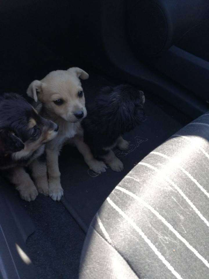 puppies abandoned on highway