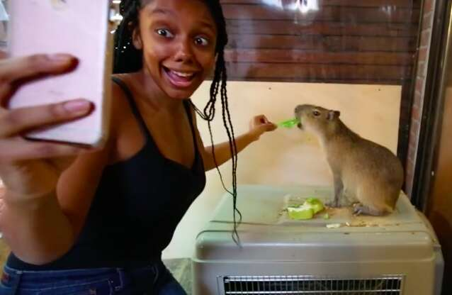 Woman taking selfie while feeding capybara