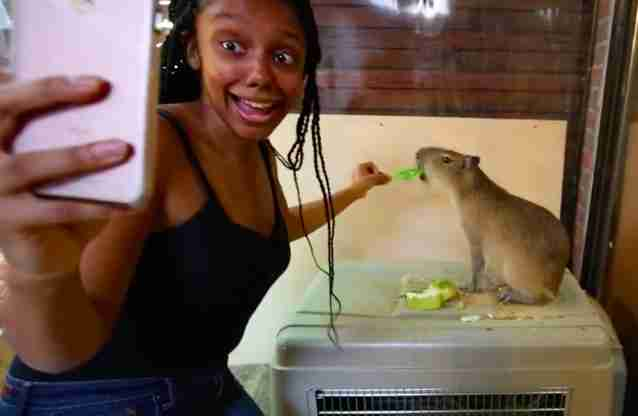 Woman taking selfie while feeding capybara