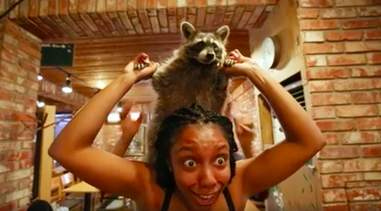 Woman holding raccoon on her shoulders
