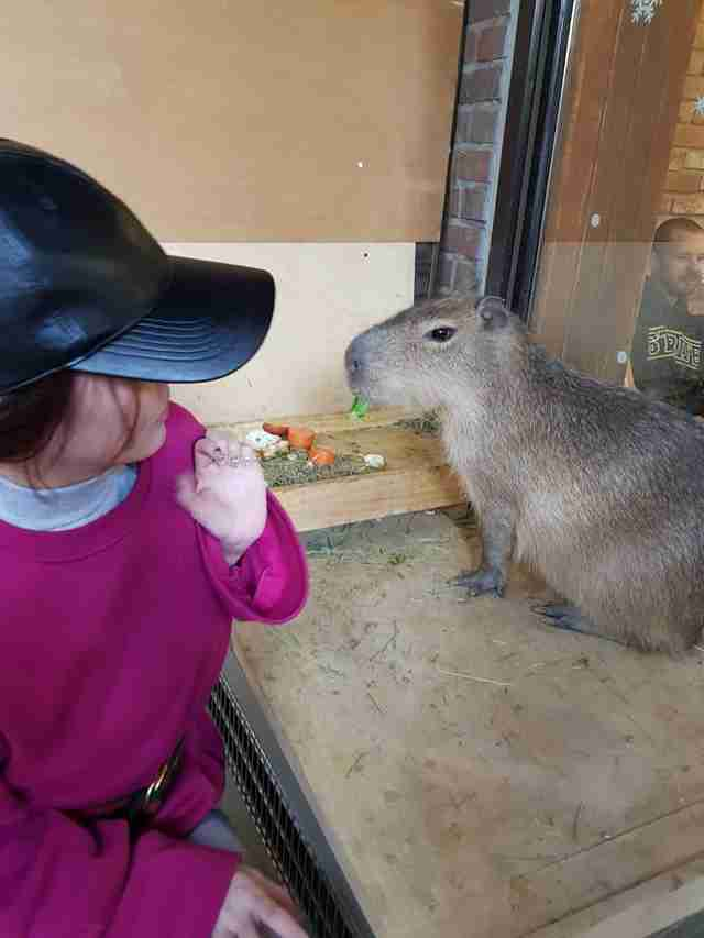 Woman feeding capybara