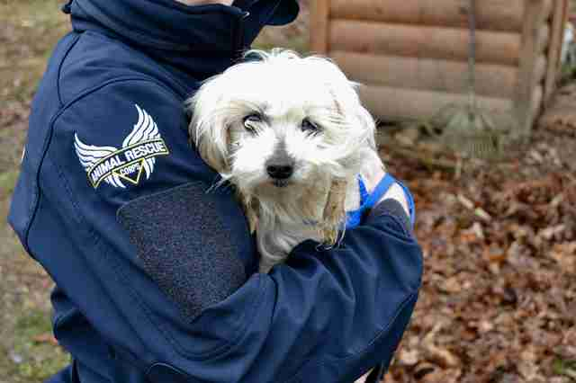 Dog rescued from Tennessee backyard breeder