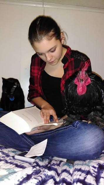 Rooster sitting on girl's lap as she reads