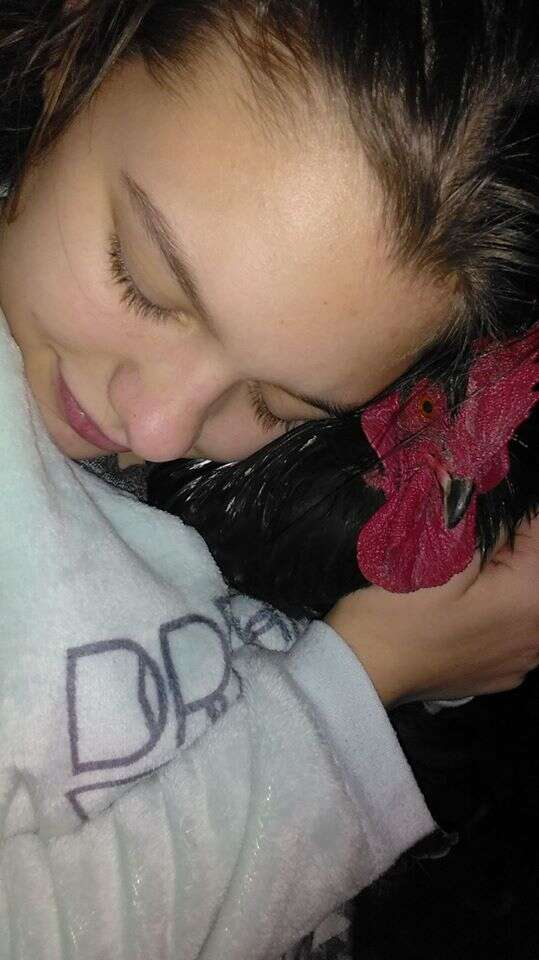 Girl hugging rooster to her