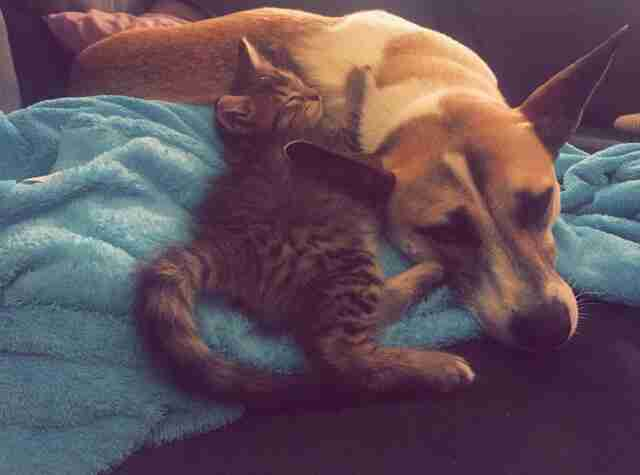 Dog and cat cuddling together on bed