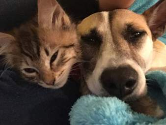 Dog and kittens snuggling together