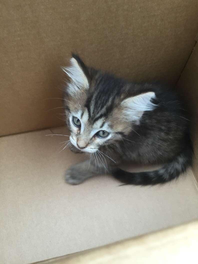 Scared looking kitten inside cardboard box