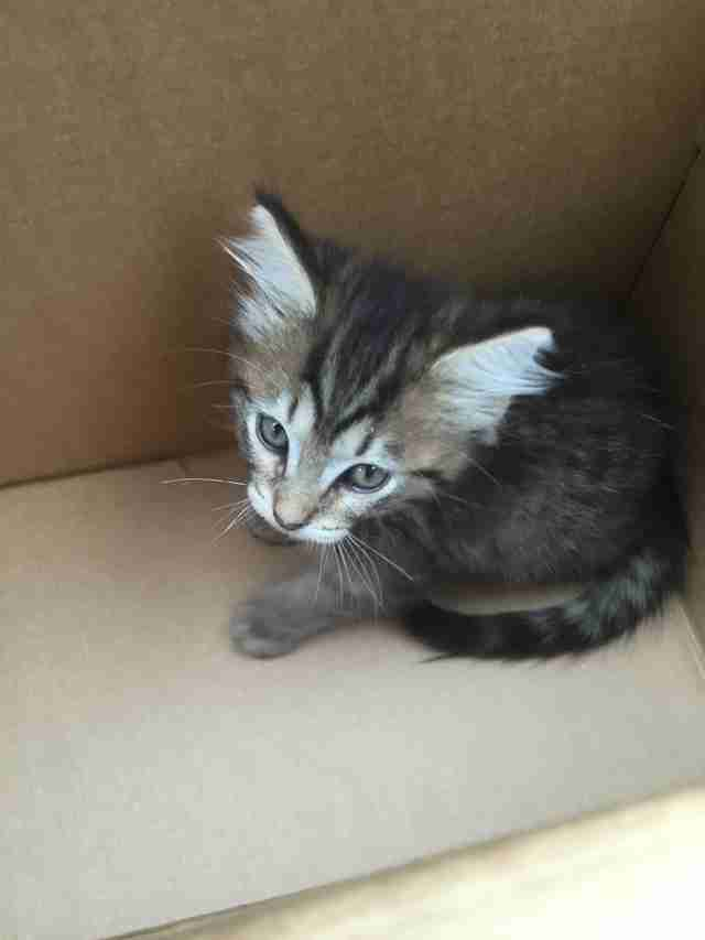 Scared looking kitten inside cardboard box